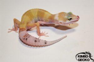 3. White&Yellow Eclipse het. Raptor
