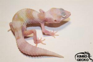 6. White&Yellow Mack Snow Raptor het. Diablo Blanco