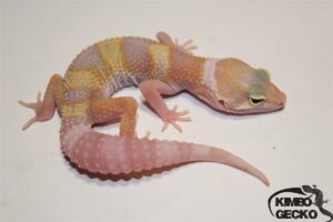 9. (White&Yellow) Raptor het. Diablo Blanco